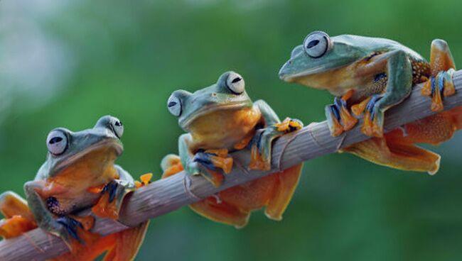 Видеть во сне жабу