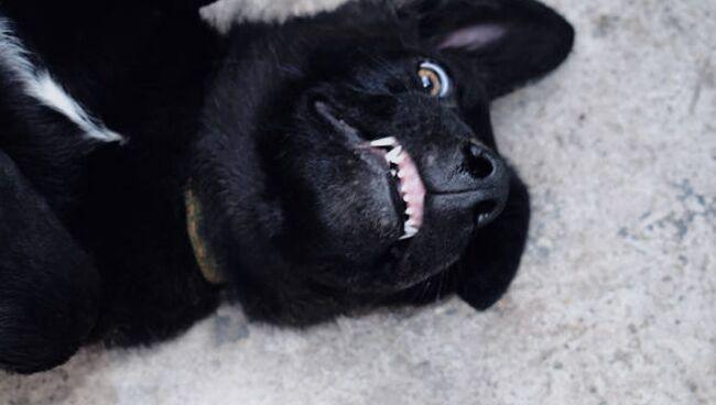 Приснилась собака добрая