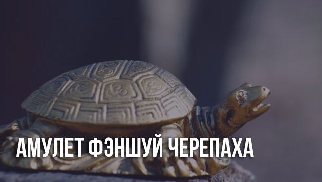 Талисман черепахи