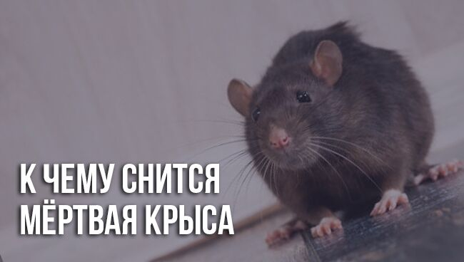 Во сне убить крысу что означает
