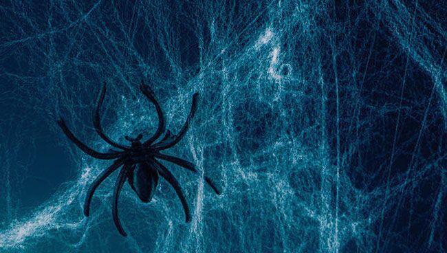 Сонник чёрный паук