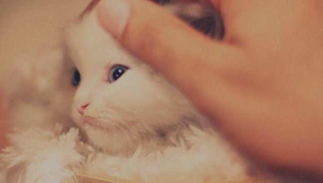 Гладить во сне пушистых котят