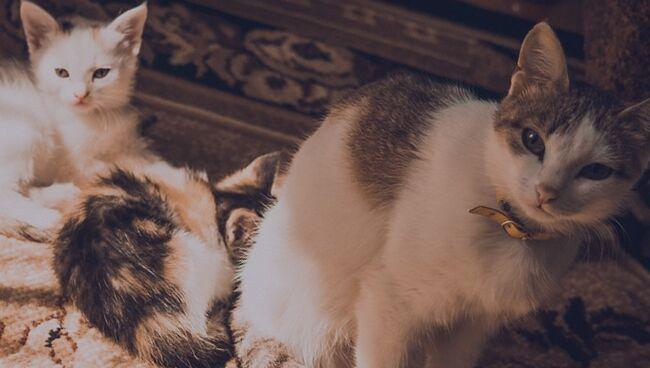 Расшифровка сна по цвету кошки