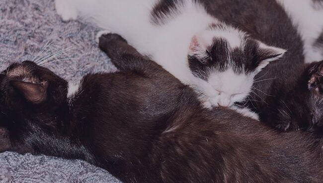 Приснился сон о кошке и котятах