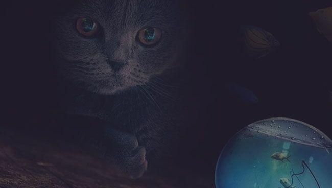 Что означает черная кошка во сне