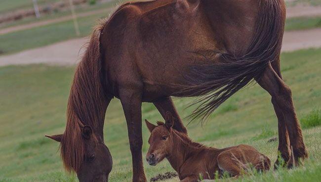 Видеть во сне лошадь что означает