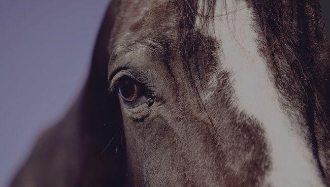 Видеть во сне коня