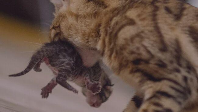 Кошка несет котенка во сне