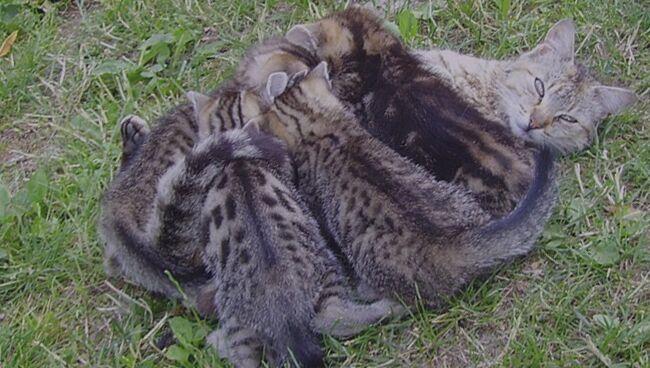 Рождение котят по соннику