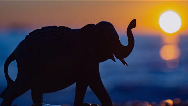 Слон фэншуй