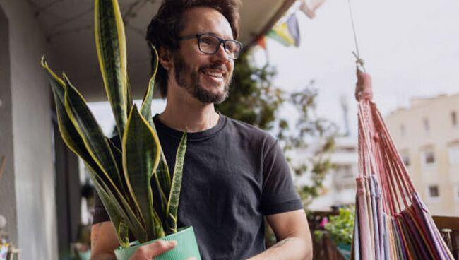 Фэншуй растения